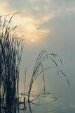 Reed am See im Nebel des frühen Morgens Stockbild