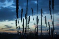 Reed& x27 ; silhouette de s parmi des collines photos stock