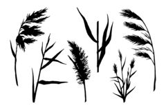 Reed silhouette set. Reed Hand drawn sketch vector silhouette set. Water plant illustration. Reeds in a pond, doodle style stock illustration