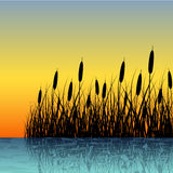 Reed silhouette with water reflection Royalty Free Stock Photography