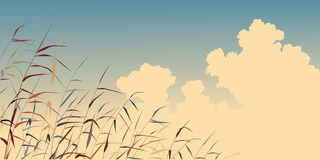 Reed sky Royalty Free Stock Photos