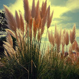 Reed on sky background Royalty Free Stock Images