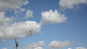 Reed sky Stock Photo