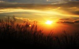 Reed sous le coucher de soleil Photographie stock