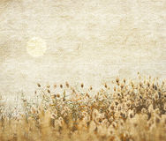 Reed stalks in the swamp. Against sunlight Stock Photography