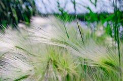 Reed sul lago Fotografie Stock