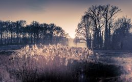 Reed in the sun. Landscape in Leudal, Heythuysen in the Netherlands Stock Photos