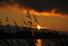Reed and sun Stock Photos