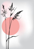 Reed at sunset. Illustration of the reed at sunset Royalty Free Stock Images