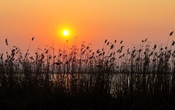 Reed sunset. Danube Delta sunset with reed and water Royalty Free Stock Photography