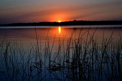 Reed sunset 2 Royalty Free Stock Images