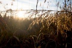 Reed swamp Stock Image