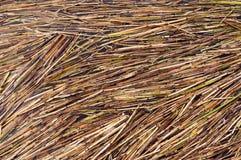 Reed Texture. Images libres de droits