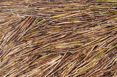 Reed Texture. Royalty Free Stock Images