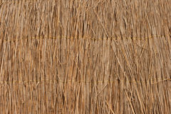 Reed texture wallpaper or background Royalty Free Stock Photo