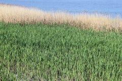 Reed und blauer Fluss stockfotografie