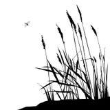 Reed und Fliegenlibelle - Vektorillustration