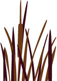 Reed vector. Reed Grass silhouette, isolated. Vector illustration Stock Photo