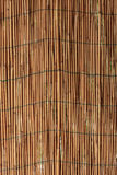 Reed wall Royalty Free Stock Photo