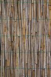 Reed wall Royalty Free Stock Photos