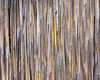 Reed wall or texture. Under daylight stock photo