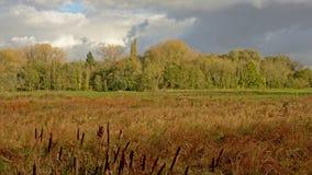 Reed, Wiese und treesin, die ein Marschland mit Bäumen auf einem bewölkten landschaftlich gestalten Lizenzfreie Stockbilder