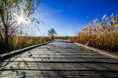Reed wood floor path sky clound Stock Photos