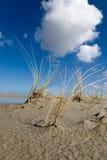 Reed y cielo azul Fotos de archivo