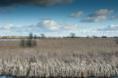 Reedbed e água aberta com céus do inverno Imagens de Stock Royalty Free