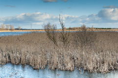 Reedbed and open water with winter skies Stock Images