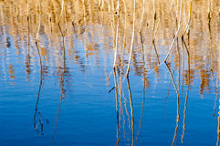 Reedbed reflections Stock Photos