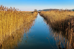 Reedbeds in north Norfolk, England Royalty Free Stock Photos
