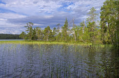 Reeded creek on a river. Reeded creek on the Pistayoki  river. Karelia, Russia Stock Photos