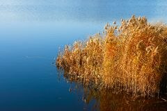 Reeded in the reservoir (I) Stock Photo