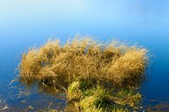 Reeded in the reservoir (II) Royalty Free Stock Photo