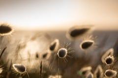 Reedgras bij de overzeese kust royalty-vrije stock foto's