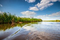Polder landscape in the Netherlands with ditches and water channels. Reedlands and water channels between the meadows of Hollandse polder Natural Dutch royalty free stock images