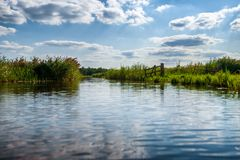 Polder landscape in the Netherlands with ditches and water channels. Reedlands and water channels between the meadows of Hollandse polder Natural Dutch royalty free stock photo