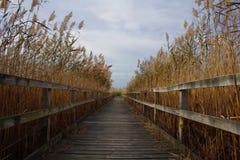 reeds дорожка Стоковые Фотографии RF