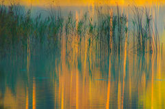 Reeds озеро стоковая фотография
