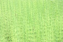Reeds Stock Photos