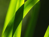 Free Reeds Stock Photography - 26090762