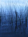 The Reeds Royalty Free Stock Images
