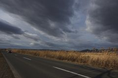 Reeds along the road under cloudy sky. Autumn landscape Royalty Free Stock Photos