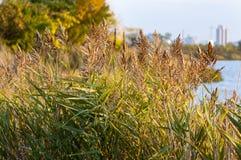 Reeds along shoreline Stock Photography
