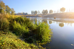 Reeds on autumn river Royalty Free Stock Photo