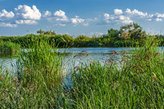 Reeds on the background of the river and the blue sky with cloud Royalty Free Stock Photography