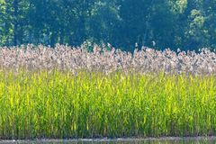 Reeds at the beach Royalty Free Stock Photography