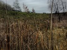 Reeds and benches Royalty Free Stock Images