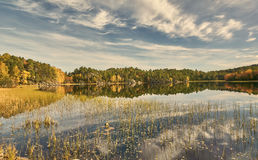 Reeds and bushes in the autumn, the Norwegian lake Stock Photos